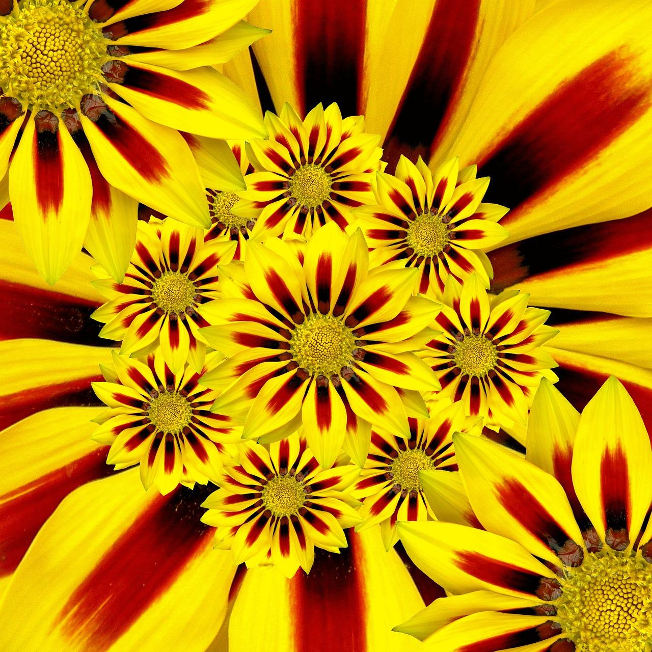 summer-flower-57226_1280